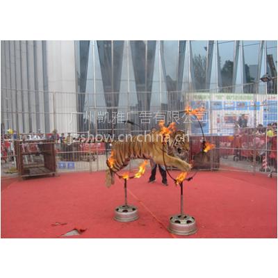 广州马戏团表演 广东马戏团表演