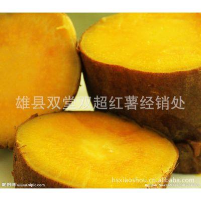 供应供应2013年优质新上市红皮红心红薯地瓜 遗字138 订购热线18932652044