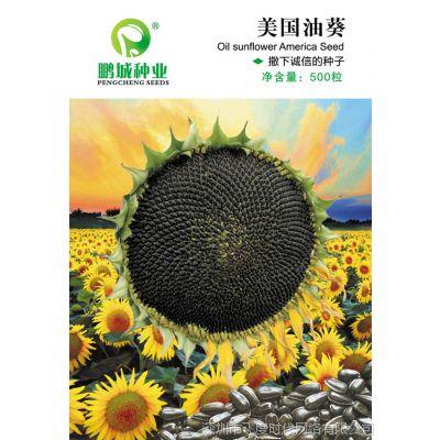 鹏城种业 粮食作物 美国油葵种子 食用向日葵 抗病高产 500粒/包