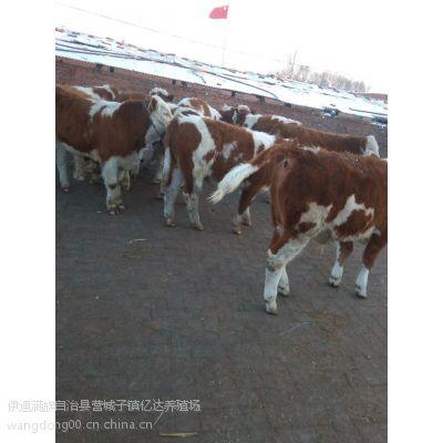 吉林改良黄牛犊价格吉林改良黄牛网吉林改良黄牛市场吉林改良黄牛养殖场