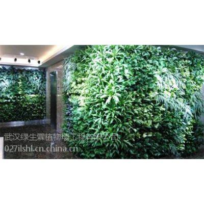 植物墙施工价格|十堰植物墙|武汉植物墙公司