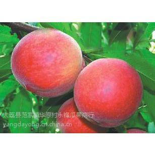 供应陕西早熟毛桃产地早熟毛桃批发基地早熟毛桃供应产地