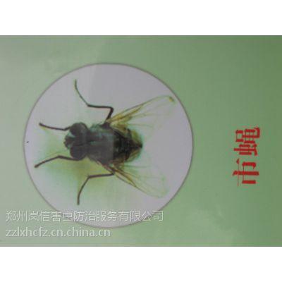 供应郑州酒店灭蟑螂灭鼠高质低价岚信公司值的信赖