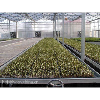 供应安平苗床网厂家,安平苗床网价格,北京热镀锌苗床网,大连温室苗床网