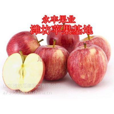 山东红嘎啦苹果产地 山东潍坊苹果价格 嘎啦苹果75以上