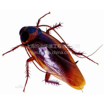 供应阜阳灭蟑螂公司家庭灭蟑螂教您好办法