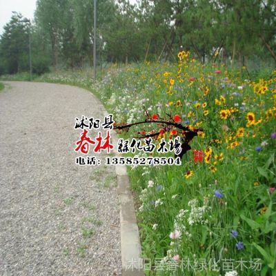 供应南方别墅野花组合 北方耐寒野花组合 山体护坡 野花组合种子等