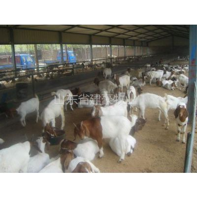 供应哪里供应波尔山羊专业养殖技术