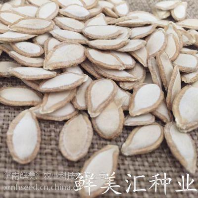供应日本进口F1代黄瓜嫁接砧木种子—爱田