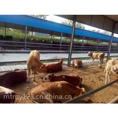 嘉祥明泰牧业科学养殖技术