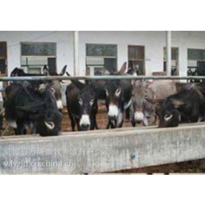 万隆牧业(图)_肉驴养殖效益_郓城肉驴养殖