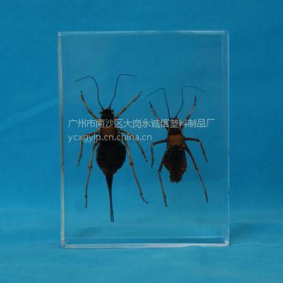 厂家批发树脂昆虫标本 水晶胶工艺品 教学标本 人工琥珀标本