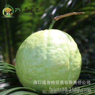 椰岛老农 海南 新鲜 水果  零售 批发 海南 十斤红心 番 石榴