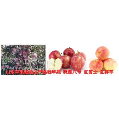 山东苹果产地 供应潍坊红富士苹果