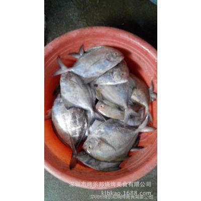批发鲳鱼黄鱼红三鱼红线鱼刀鲤水产品活海鲜三文鱼带鱼金枪鱼