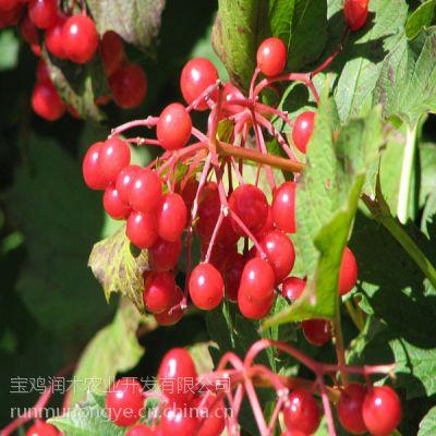 厂价直销蔓越莓果粉