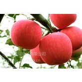 苹果浓缩汁 盈润厂家直销浓缩苹果汁 100%无添加剂 275公斤/桶包装
