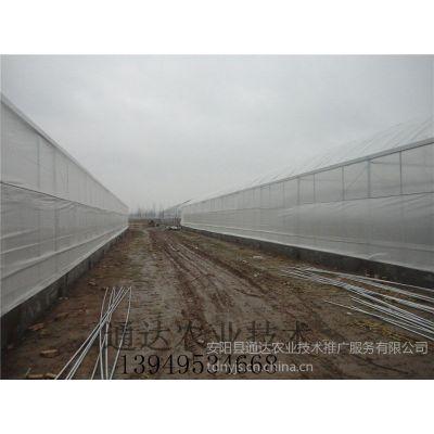 供应巴中有没有蔬菜大棚塑料大棚建设厂家报价多少