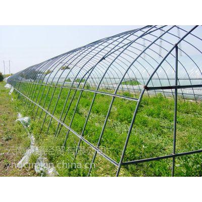 昆明大棚管价格(蔬菜大棚4分6分管)厂家报价15812137463