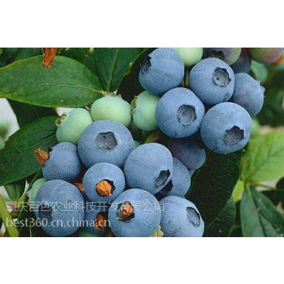 百色农业(多图)、蓝莓苗木信息、遵义蓝莓苗木