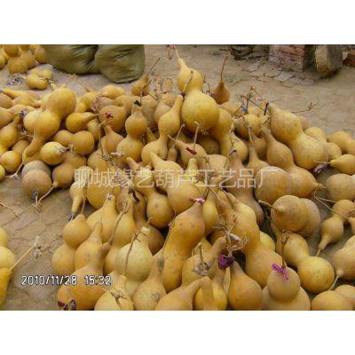 供应天然大葫芦销售,天然大葫芦价格低