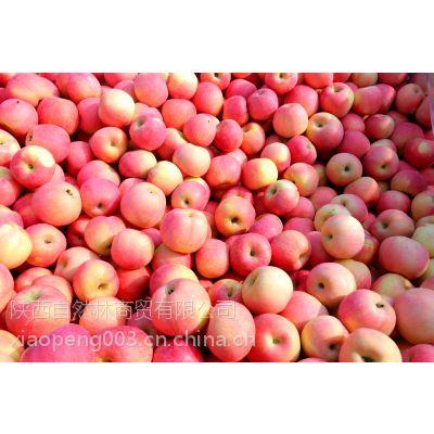 陕西红富士苹果12个精品装快递包邮