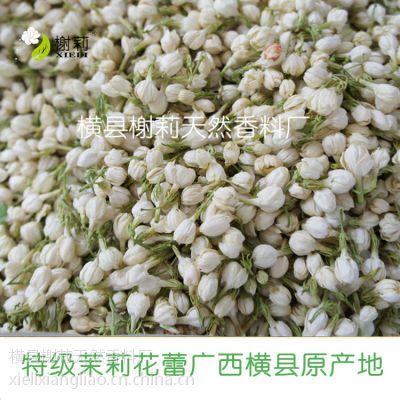 茉莉花蕾天然茉莉花花草茶淘宝热销广西横县厂家