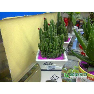 供应国庆节室内植物出租花木租摆绿植租赁