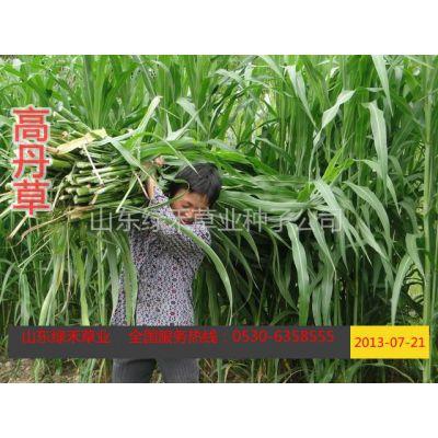 供应河北秦皇岛养牛种植什么牧草品种