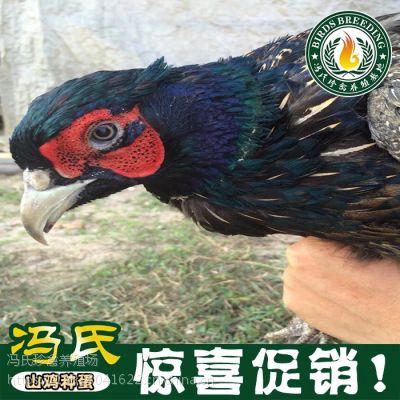 冯氏珍珠鸡,珍珠鸡,绿壳鸡,黑凤鸡,七彩山鸡,鹧鸪,火鸡,绿头野鸭,元宝鸡
