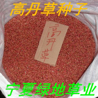 批发牧草种子【高丹草种子】一年生甜象草 畜禽饲料 量大从优