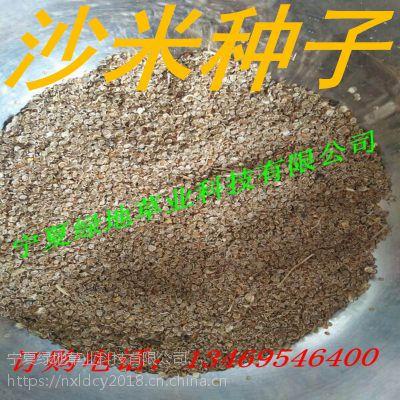 批发牧草种子【沙米种子】优质高产抗旱 新货 牛羊骆驼饲料