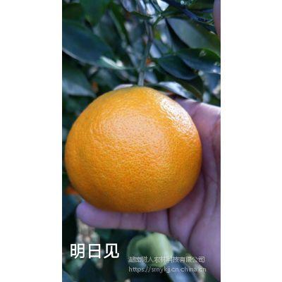 柑橘种植产业品种选择明日见***稳定售价高