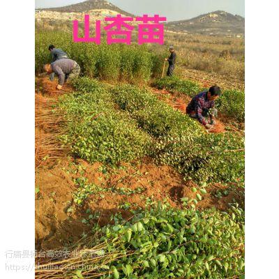 优质果树苗价格