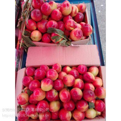 水果代销网