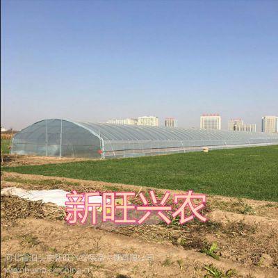 河北新旺兴农养殖大棚8411圆拱蔬菜种植大棚