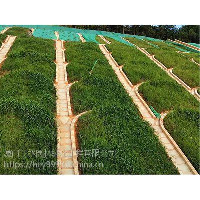 广西草种边坡长期复绿狗牙根种籽价格