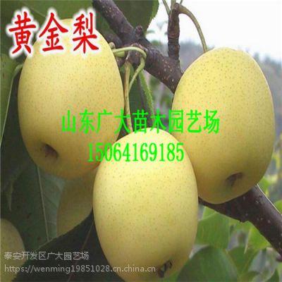 梨树苗栽植管理解答 梨苗品种介绍 梨树苗批发 一公分梨苗价格多少钱一棵