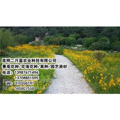 昆明花海花种_云南花海花种销售_昆明花海花种价格