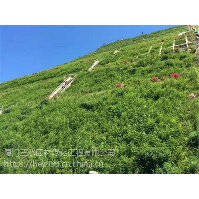 大量提供南宁市矿区荒山植被复绿草灌种籽