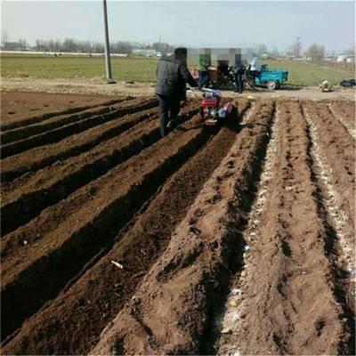 种植羊肚菌开沟覆土不费力 圣通开沟培土机