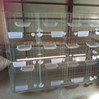 安平兴博丝网直销乳鸽养殖联排养殖场用3层12位铁丝镀锌鸽子笼