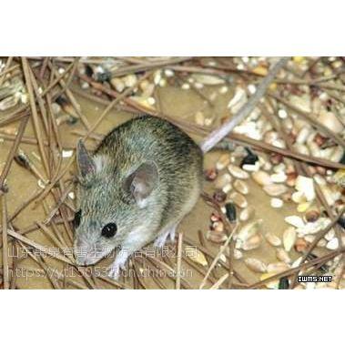 烟台蓬莱龙口处理老鼠 专业灭鼠公司
