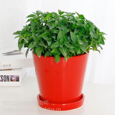 武汉植物租赁公司办公室内大型植物花卉盆栽出租养护绿植租摆定制
