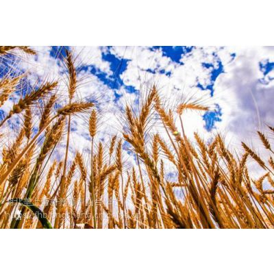 垄上畜禽(在线咨询),恩施小麦,小麦价格预测
