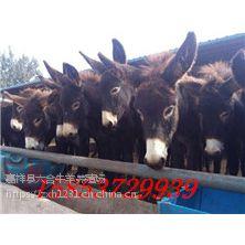 白山抚松县肉驴苗出售肉驴崽价格华旺特种养殖场