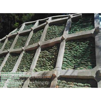 福州景晖生态工程(图)_福州狗牙根种子_种子