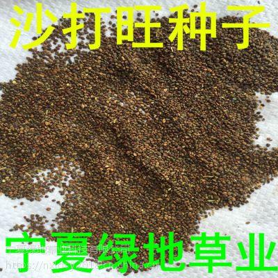 批发牧草种子【沙打旺种子】固堤防沙 量大从优 新货