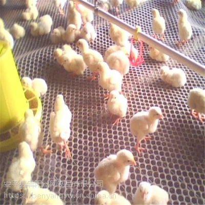 禽类乙烯养殖网@大连禽类乙烯养殖网厂家