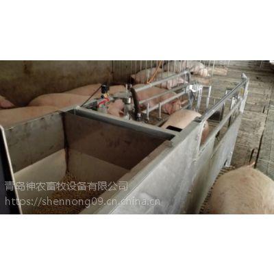 淄博智能母猪精确饲喂散养系统-神农母猪电子饲喂站-养猪设备